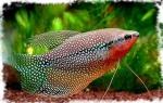 Аквариумные растения эхинодорусы: совершайте покупки на проверенном сайте