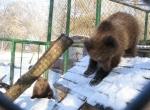 Хмельницькі Потап і Настя поїдуть до київського зоопарку