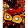 RESPLANTA PALM – водорастворимое масло пальмы,  25 мл